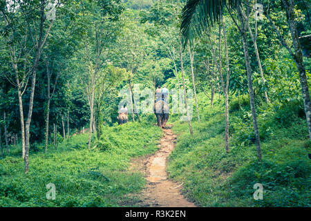 tourist group rides through the jungle on the backs of elephants - Stock Photo