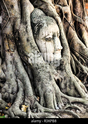 Southeast Asia, Thailand, Ayutthaya, the head of the sandstone Buddha image in roots of Bodhi tree - Stock Photo