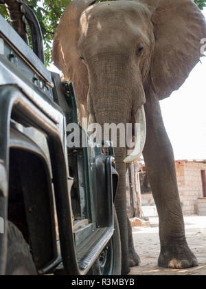 Africa, Zimbabwe, Matusadona National Park. Elephant in front of tourist vehicle. Credit as: Bill Young / Jaynes Gallery / DanitaDelimont.com - Stock Photo
