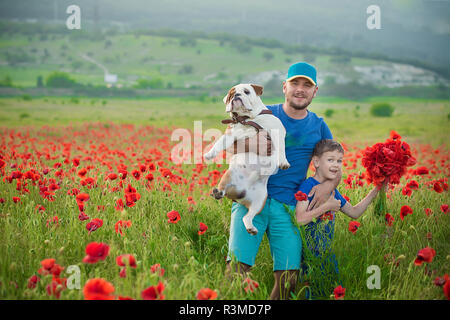 Handsome father together with happy cute smiling boy son and english bull dog on a poppy field - Stock Photo