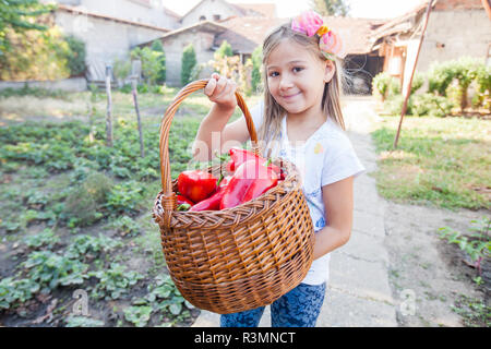 Smiling little girl holding basket of red bell pepper in garden, organic home-grown paprika vegetable. - Stock Photo