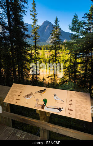 Interpretive sign at Cave and Basin National Historic Site, Banff National Park, Alberta, Canada - Stock Photo