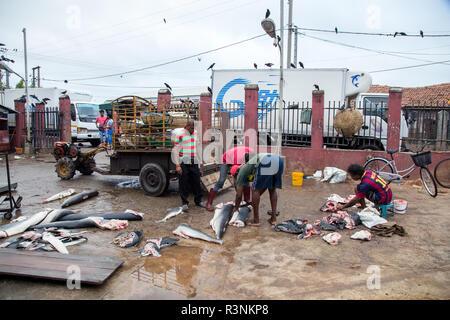 Early morning fish market in Negombo, Sri Lanka - Stock Photo