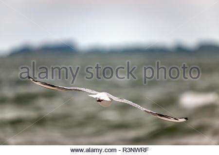 Möwe fliegt auf das offene Meer - Stock Photo