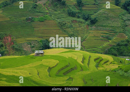 Aerial view of Vietnam landscapes. Rice fields on terraced of Mu Cang Chai, YenBai. Royalty high-quality free stock image of terrace rice field - Stock Photo