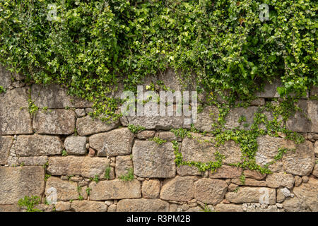 Plant grow on top of wall made from the granite rocks block stack. - Stock Photo