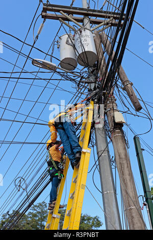 Two electrical power distribution workers, one male, one female, up ladders, wearing harnesses, replacing a wooden telegraph pole with a steel one on  - Stock Photo