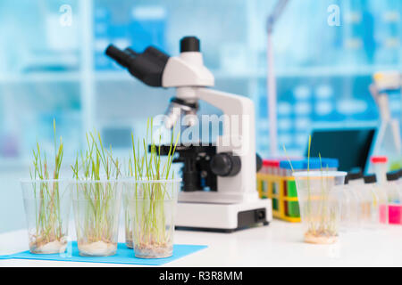 Agriculture research, conceptual image.
