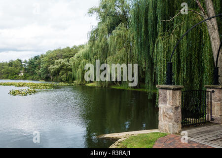 A weeping willow tree bends gracefully over a lake at the The Villas at Gervasi Vineyard in Canton, Ohio, USA - Stock Photo