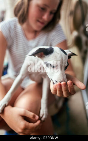 Puppy on girl's lap - Stock Photo