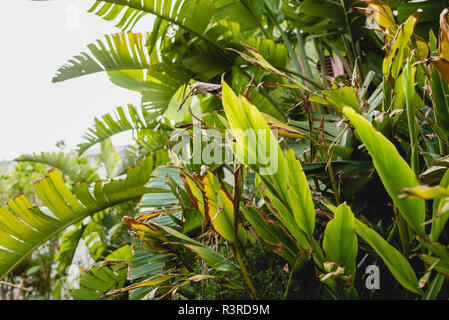 Seamless pattern with banana palm leaves decorative tropical stock vector art illustration for Tropical smoothie palm beach gardens