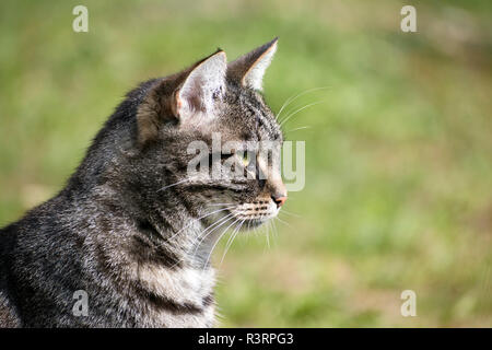 tabby cat portrait in profile against a green background, copy space