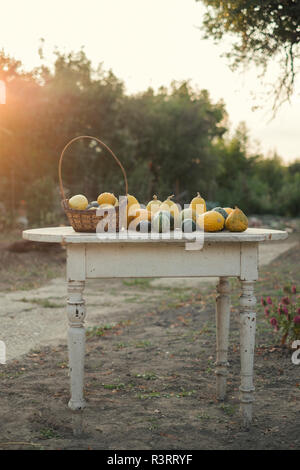 Autumn pumpkins on a wooden table in the garden - Stock Photo