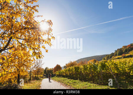 Germany, Rhineland Palatinate, Pfalz, hiker on wine-route-hiking-trail, vineyards and cherry trees in autumn colours - Stock Photo