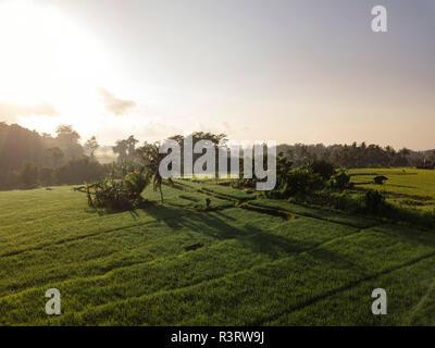 Indonesia, Bali, Ubud, Aerial view of rice fields - Stock Photo