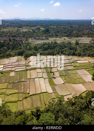 Indonesia, Bali, Ubud, Aerial view of rice fields - Stock Photo