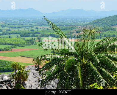 Cycas plant tree / green cycad growing on the rocky - cycad planted on hill or fern tree cycad cobia mountain landscape background - Stock Photo