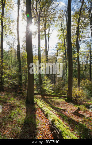 Germany,Rhineland-Palatinate, Pfalz, Palatinate Forest Nature Park in autumn - Stock Photo