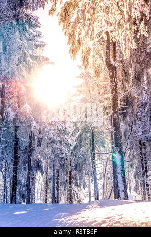 Germany, Baden-Wuerttemberg, snow-covered trees at Black forest near Mummelsee - Stock Photo