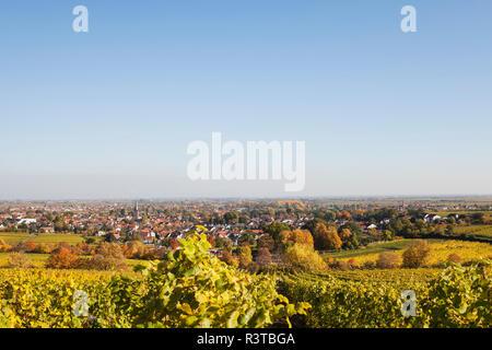 Germany,Rhineland-Palatinate, Pfalz, Deidesheim, German Wine Route, vineyards in autumn colours, Ludwigshafen in distance - Stock Photo
