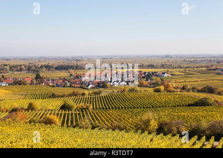 Germany,Rhineland-Palatinate, Pfalz, German Wine Route, wine village Forst and vineyards in autumn colours - Stock Photo