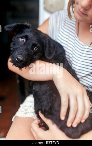 Portrait of black puppy on girl's lap - Stock Photo
