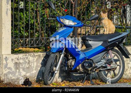 Ginger cat sitting on blue scooter, with back kitten on floor, Kalambaka, Greece - Stock Photo