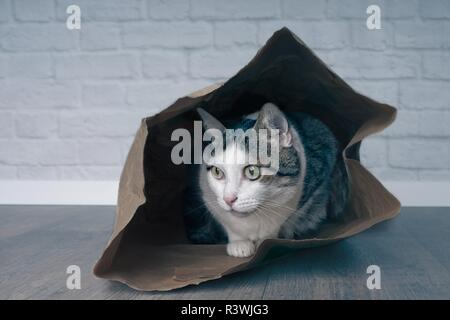 Cute tabby cat hiding in a shopping bag and looking curious sideways . - Stock Photo
