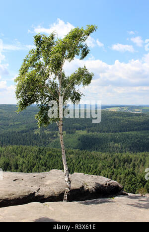 birch between rocks - elbe sandstone mountains,saxon switzerland - Stock Photo