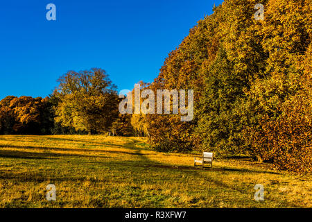 Empty bench in the autumn sun on Hampstead Heath, London, UK - Stock Photo