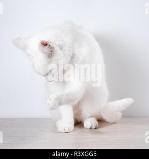 White cat sits on a gray, wooden table. On a white background. Close-up. - Stock Photo