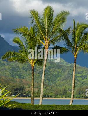 Hanalei Bay, Hawaii, Kauai, Pacific, Palm Trees - Stock Photo
