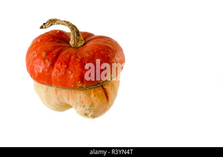 decorative pumpkin in the form of a mushroom with an orange hat and a long tail on a white background - Stock Photo