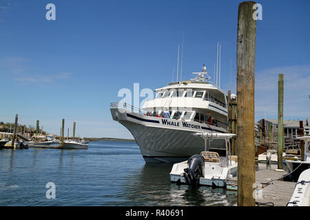 Whale Watcher, Barnstable Harbor, Barnstable, Cape Cod, Massachusetts, Usa. - Stock Photo