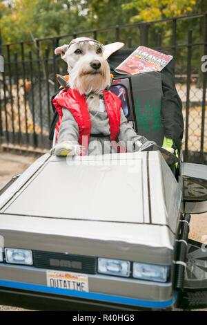 New York City, NY, USA. 25th Annual Halloween Pet Parade, Tompkins Square Park. Mini Schnauzer in back to the Future costume - Stock Photo