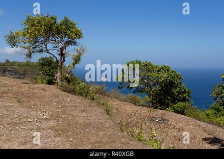 tree at Bali Manta Point Diving place at Nusa Penida island - Stock Photo