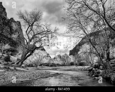 USA, Utah. Zion National Park, Virgin River and Cottonwoods in winter - Stock Photo