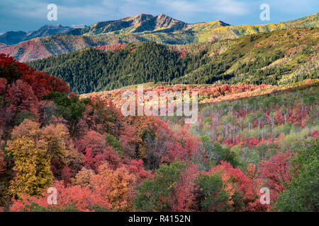 Brilliant Fall foliage near Midway and Heber Valley, Utah - Stock Photo