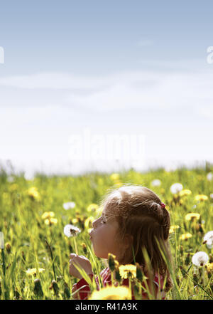 a little girl sitting in a meadow and blowing on a dandelion - part 1 - Stock Photo