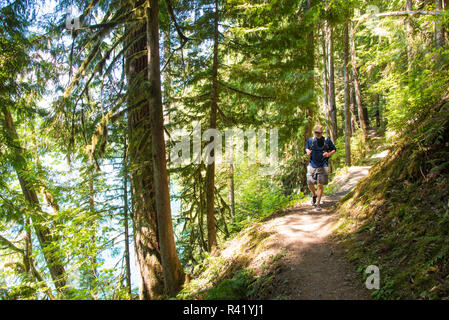 USA, Washington State. Hiker on shady Anderson Point Campground trail. (MR) - Stock Photo