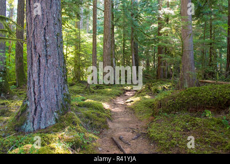 Woodland trail Anderson Point Campground East Baker Lake - Stock Photo