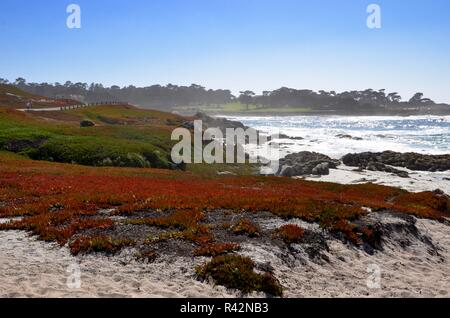 Monterey Peninsula near Pebble Beach in California, coast view towards the Pacific ocean, rocky coast and colorful plants on white sand, September - Stock Photo