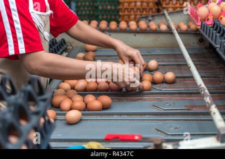 Chicken Farm Machine, production line process - Stock Photo