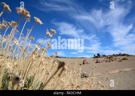 the teide on tenerife in the canary islands