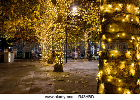Evening images looking at trees decorated with Christmas lights illuminating the pavement and leaves, Salisbury, Wiltshire, England, UK - Stock Photo