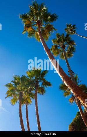 San Clemente, Southern California, December 2009. - Stock Photo