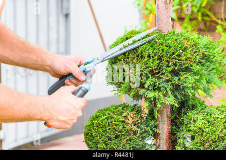 hands,hedge trimmer and tree - Stock Photo