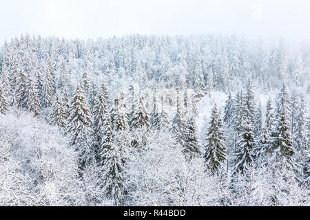 View of a forest in the winter with snow and frost - Stock Photo