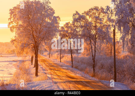 Treelined country road at sunset in winter - Stock Photo