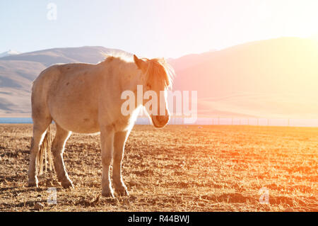 Horse in sunrise - Stock Photo
